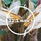 Урожай кукурузы станет рекордным
