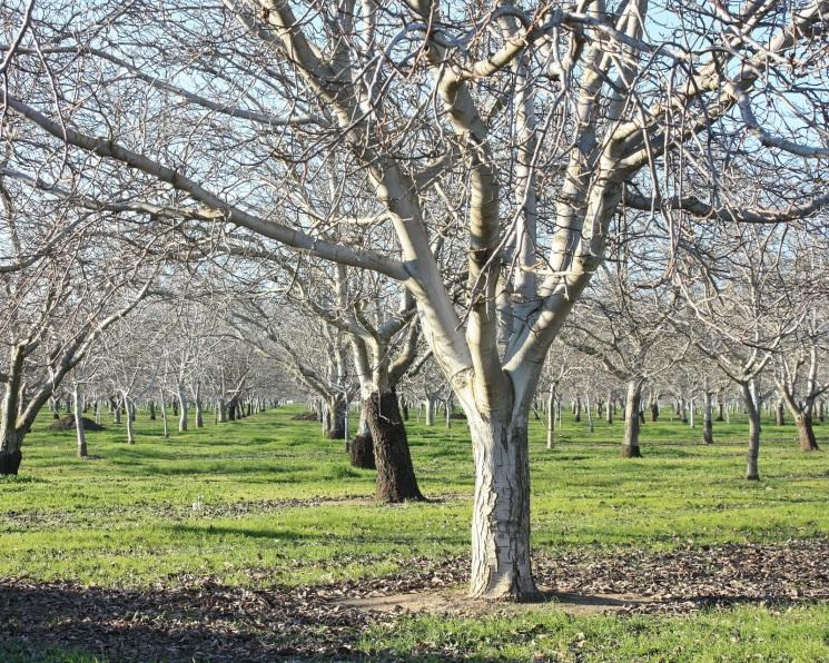 «Сад-Гигант» сократил чистую прибыль в 2,6 раза