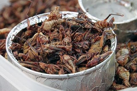 Мировой рынок съедобных насекомых вырастет до $1,2 млрд к 2023 году