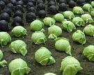 В Кабардино-Балкарии запустят овощной комплекс