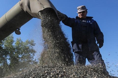 Экспорт подсолнечника может достигнуть 1 млн тонн