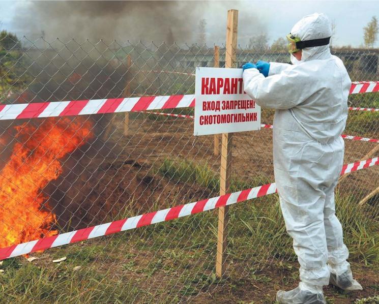 АЧС экспорту не помеха? Как влияет распространение вируса в новых регионах и странах на развитие свиноводческой отрасли