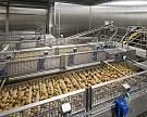 Рынок картофеля фри прибавляет по 2% в год