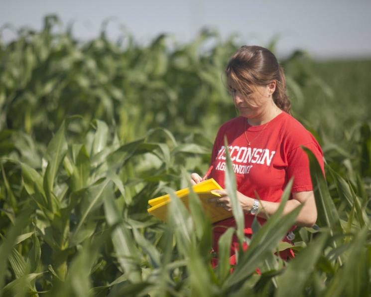 Селекция лишила кукурузу выносливости