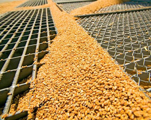 Потребление зерна превысит производство
