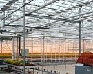 SEN планирует строительство тепличного комплекса в Пензенской области