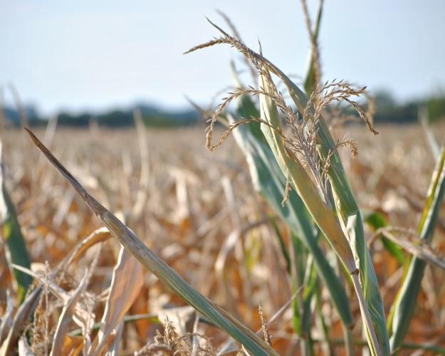 Правила страхования урожая предложено пересмотреть