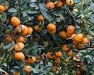 Поставки египетских фруктов иовощей могут вскоре возобновиться