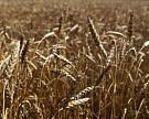 Россия заменит США в поставках зерна на мировые рынки