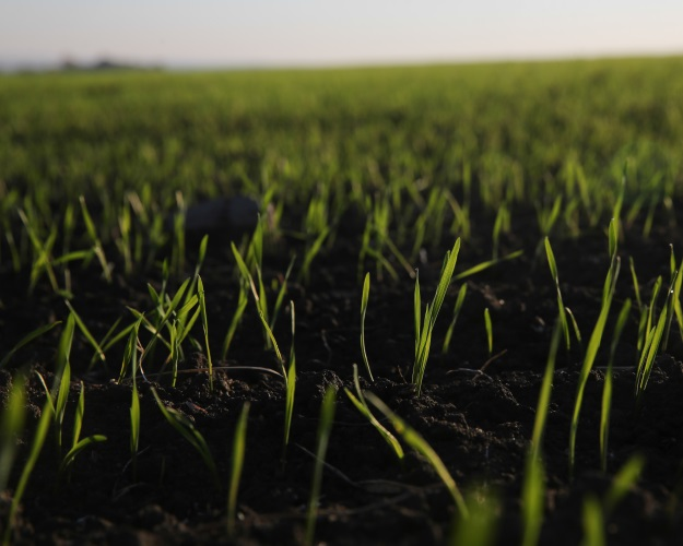 Озимые агрокультуры погибли на3% площадей