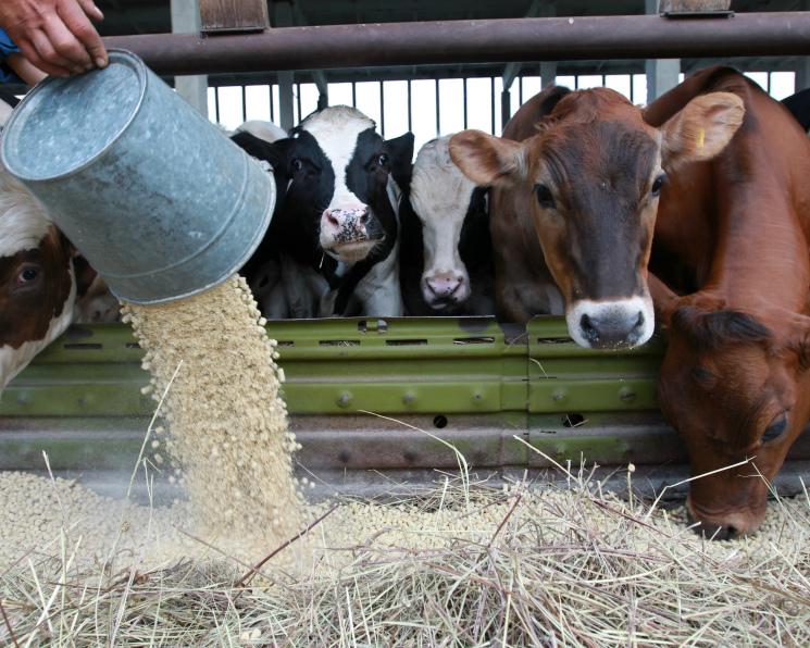Формула кормления. Кто стоит на страже качества кормов