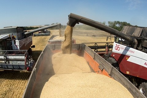 ОЗК хочет стать одним из крупнейших зернотрейдеров