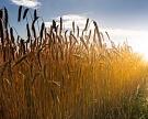 Площадь сельхозземель сократилась на9,8 млн га