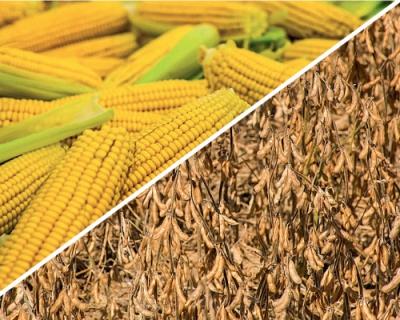 Соя и кукуруза— лидеры роста
