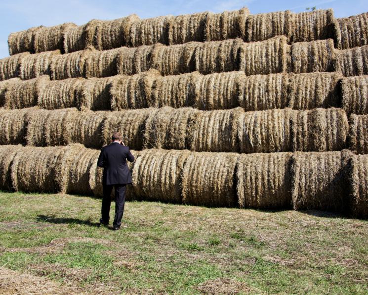 Сколько стоит агробизнес