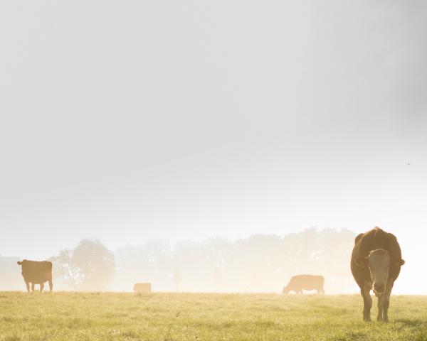 На племенное животноводство нужно почти 62млрдруб.