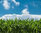 Syngenta на 50% увеличит продажи семян в России