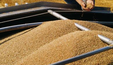 Россия небудет вводить зерновое эмбарго