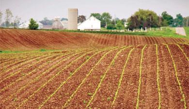 Сельскохозяйственная десятина