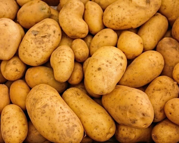 Производство товарного картофеля может вырасти вдвое