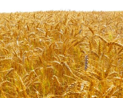 Главное событие, декабрь 2015: Урожай