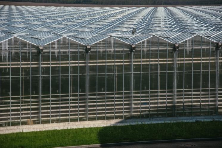 Тепличный комплекс из топ-10 выставлен на продажу