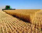 Урожай зерновых России в 2014 году может оказаться рекордным