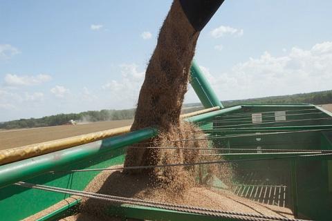 Аналитики продолжают снижать прогнозы урожая зерна