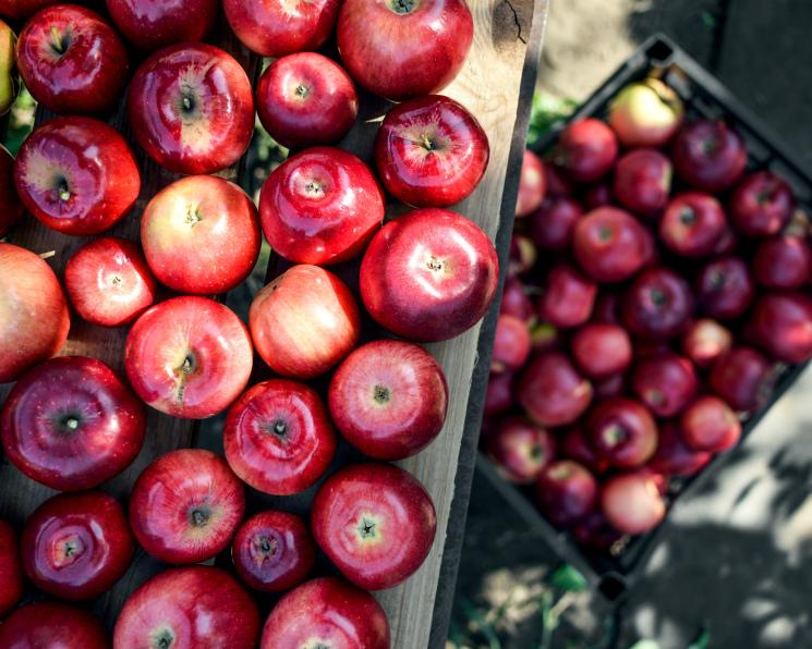 Нередкий фрукт. Почему инвесторы делают ставку на яблоки