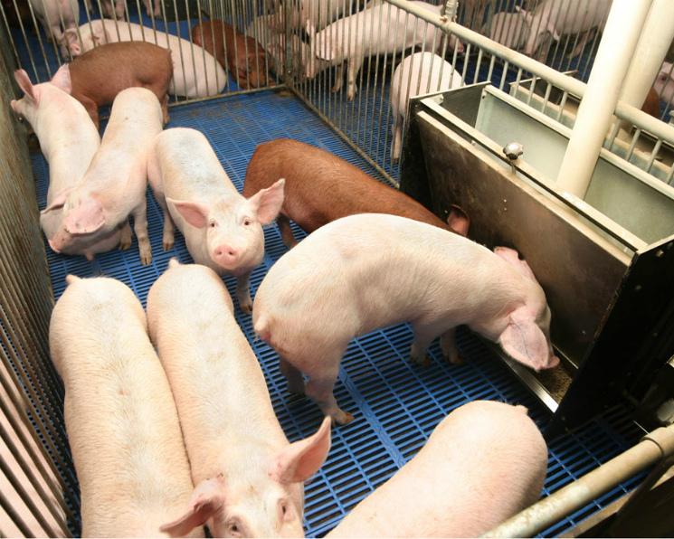 Индия присоединяется к отказу от антибиотиков в животноводстве