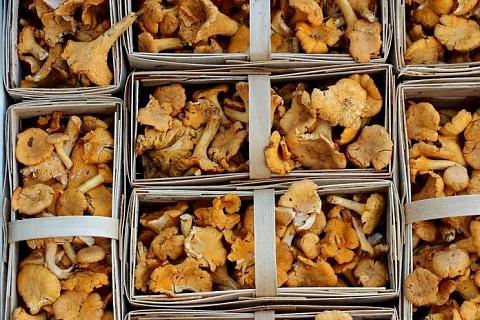 Правительство поддержит заготовку лесных грибов и производство шоколада