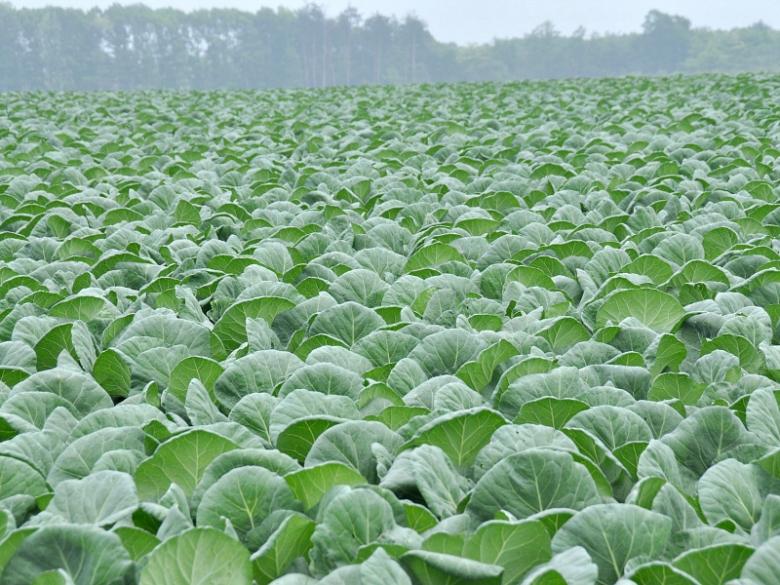 Урожай овощей стал больше