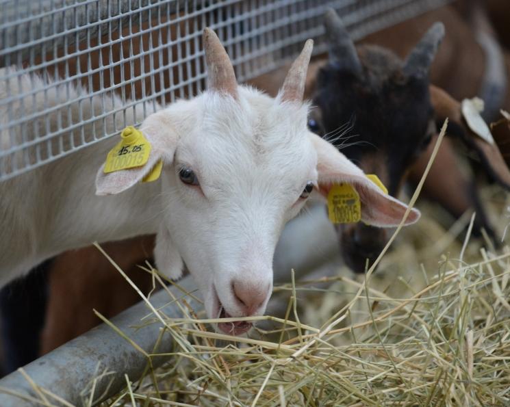 В Подмосковье появятся новые сырзаводы и молочные фермы