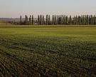 Гибель посевов озимых вРоссии оценивается науровне 5,6%
