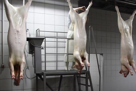 Импорт свинины вырос на 86%