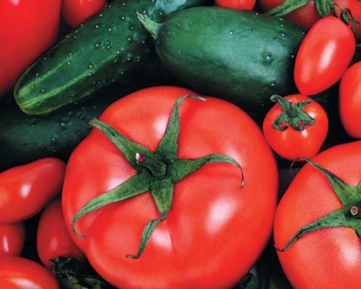Тепличный рост. Урожай овощей в закрытом грунте превысил 1,2 млн тонн
