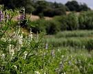 Ставропольский НИИСХ повышает качество зерна