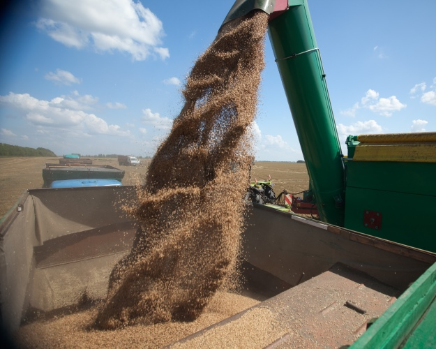 Сбор зерновых в Российской Федерации превысил 119 млн т