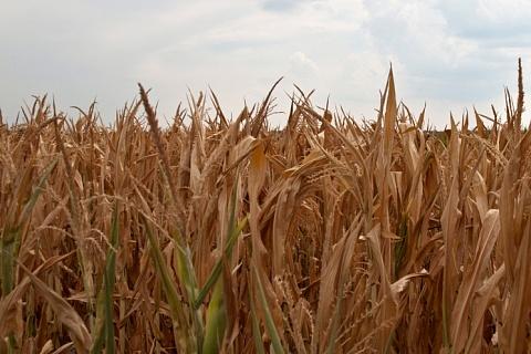 Опрос: снижение цен, рост издержек и риск гибели посевов