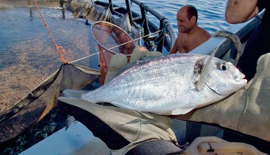 Рыба вне закона