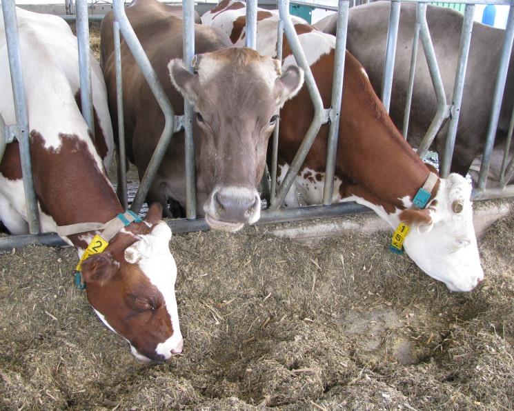«ЭкоНива» найдет деньги на молоко через IPO. Акции компании могут разместить на бирже к середине осени