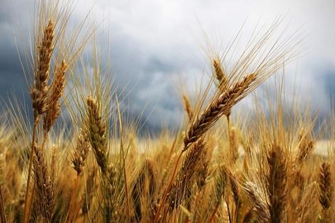Минсельхоз хочет расширить систему агрострахования