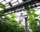 Производство тепличных овощей выросло на 50% с 2012 года