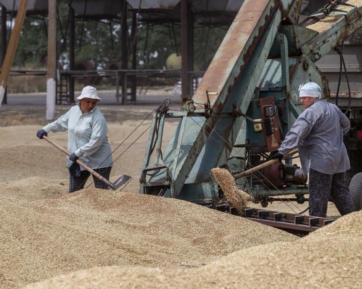 Внутреннее потребление зерна в этом сезоне сократится