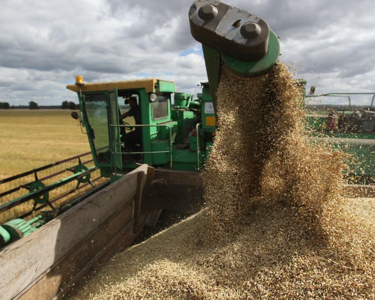Сбор зерна снова превысил 100 млн тонн. Рост уровня агротехнологий помог аграриям преодолеть проблемы с погодой