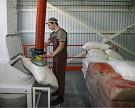 «Продимекс» вложит более 2,5 млрд рублей в сахарный завод в Курской области