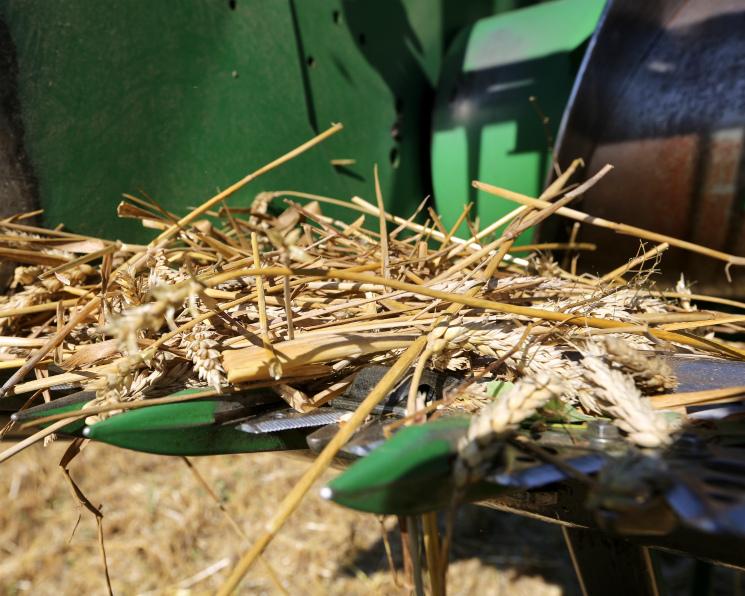 Аналитики повысили прогнозы урожая зерна