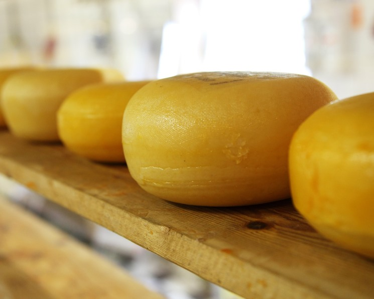 «Бетагран Липецк» построит мини-завод по выпуску твердых сыров и сливочного масла