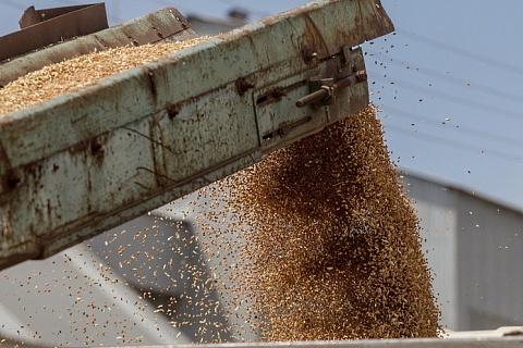 Экспорт зерна в мае составит 1,2 млн тонн