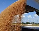 Экспорт зерна в августе достиг 4,5 млн тонн